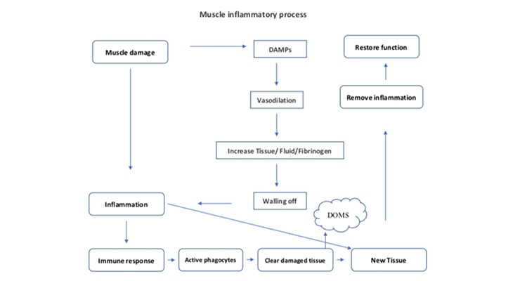 Combination of Curcumin & Boswellia Shown to Promote Exercise Recovery
