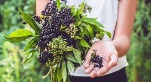 INS Farms Debuts Elder Pure Elderberry Prebiotic Juice Powder