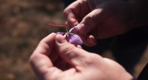 Potent Spanish Saffron Extract Lands in U.S. Market