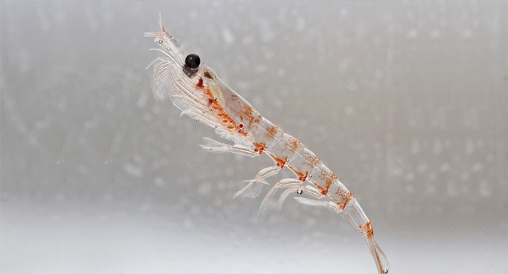 Aker BioMarine's Krill Fishery Consistently Deemed Sustainable