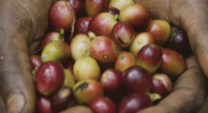 THE IMPORTANCE OF CASCARA