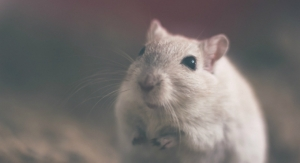 Animal-Tested Cosmetics Banned