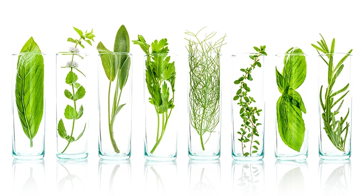 Botanical Science: TCM Plant Extract Library & Chamomile for Skin Disorders
