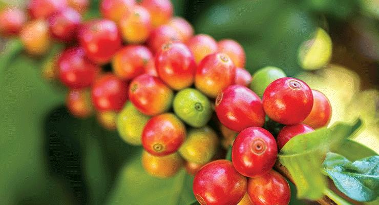 Antioxidants in the News