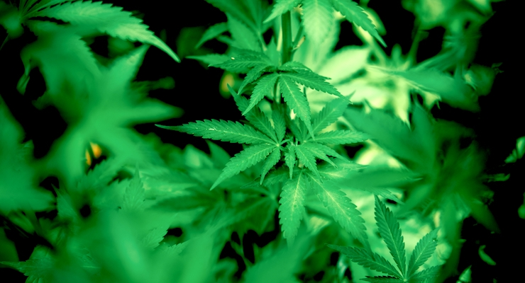AHPA Caps Off First Decade of its Cannabis Committee