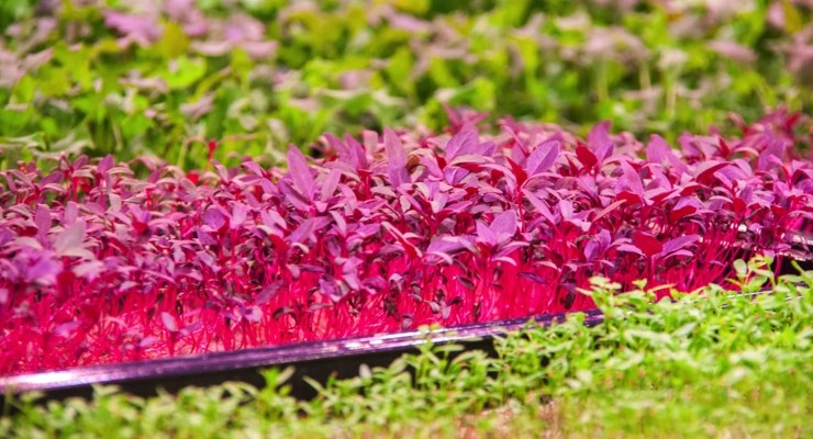 Anglo Recycling to Deliver 1 Million Nonwoven Mats for Hydroponically Growing Herbs