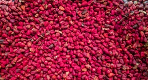 Do Annatto Tocotrienols Help Fight Obesity? Stay Tuned to Find Out