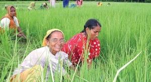 Organic India: Spiritual Seekers Getting Down to Earth