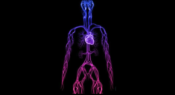 Study on Kidney Disease Suggests Vitamin K2 Mitigates Vascular Aging