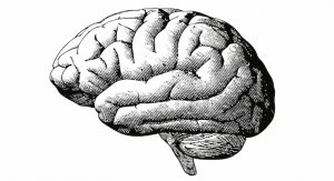 Twin Studies on GABA Suggest Dose-Dependent Improvements to Cognitive Function
