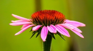 Sustainable Herbal Program Toolkit Provides Free Guidance to Botanical Industry