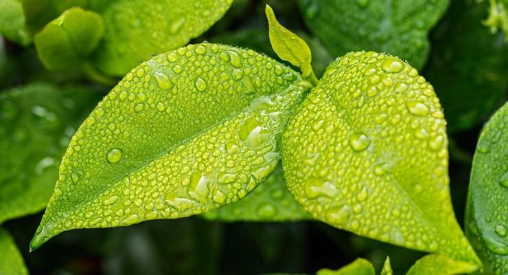 Natural Ingredients Gain Popularity