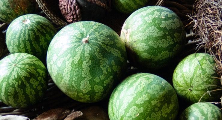 Organic Kalahari Melon Oil Arrives at Praan Naturals