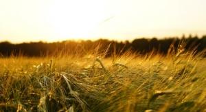 Sabinsa Ingredients Earn Non-GMO Project Verification