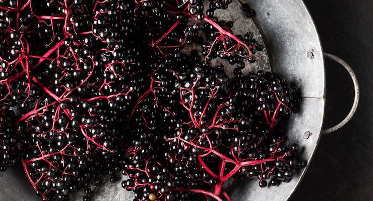 Artemis Launches New BerryDefense Immune Blend Ingredient