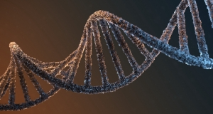 Ergothioneine Study Reveals Signs of Possible Healthy Aging Benefit