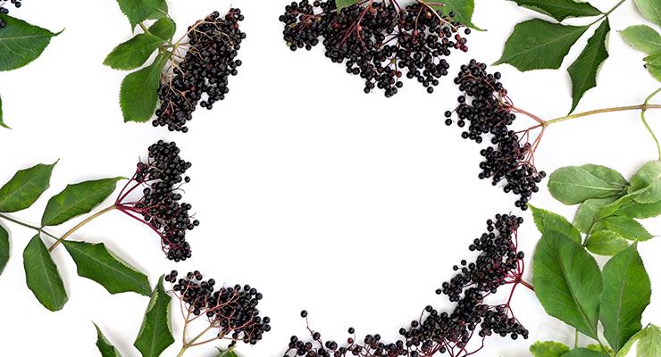 JRF Technology Debuts Elderberry Oral Film Strip