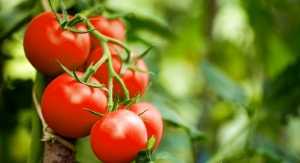 Pilot Study Suggests Tomato Powder has Superior Exercise Recovery Benefits to Lycopene