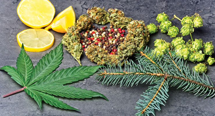 Could Terpenes Be The Next Big Thing in Supplements?