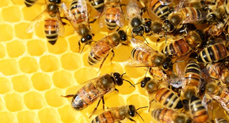 Koster Keunen Supports Beekeepers in West Africa