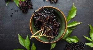 INS Farms Launches Organic and Conventional Elderberry Seed Oil
