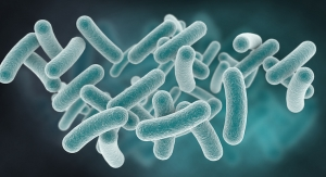 Probiotic Strain Linked to Improved ASD Symptoms in Young Children