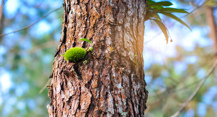 French Maritime Pine Bark Extract Linked to Reduction of Recurrent UTI