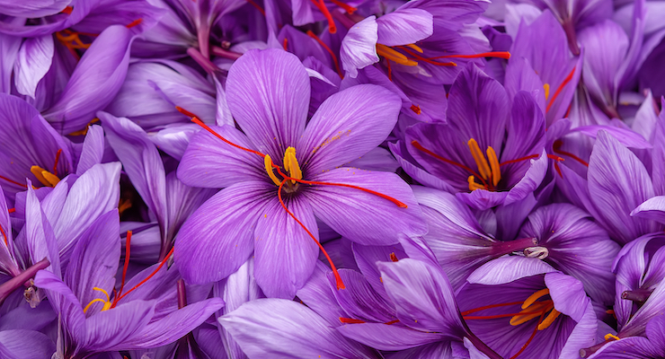 Saffron Extract May Benefit Sleep Quality by Increasing Natural Production of Melatonin