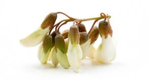 Layn Natural Ingredients Adopts Sophora Japonica Through ABC's Adopt-an-Herb Program