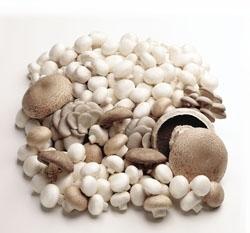 Vegan-Friendly High Vitamin D Mushroom Powder