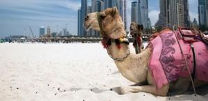 EDANA Holds Largest Ever Symposium in the MENA Region