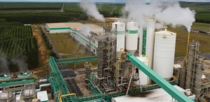 Brazil Attracts Pulp, Nonwoven Investments