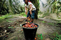 WWF Unveils 2011Palm Oil Scorecard