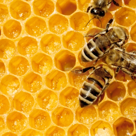Burt's Bees Is Creating A Buzz...