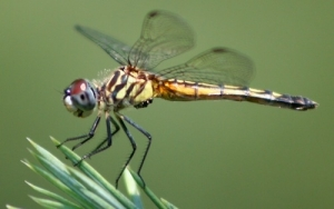 Protein From Insect Wings Inspires Elastomeric Biomedical Polymer