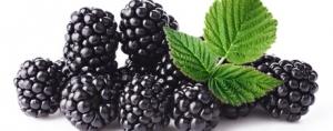 Berryceuticals: Blackberry Extract's Oral Health Benefits