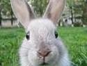 South Korea To End Animal Testing