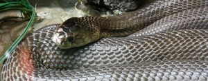 Social Media Lessons from the Bronx Zoo Cobra