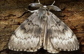 Invasive Pests Bug USDA
