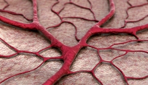 Artificial Blood Vessel Helps Test Medical Devices