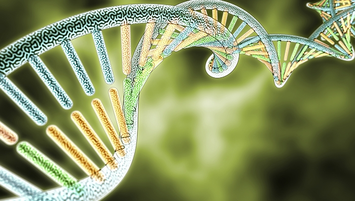 Genetic Engineering & GMOs: What You Rarely Hear