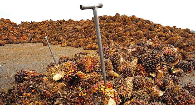 Trouble Ahead for Sustainable Palm Oil?