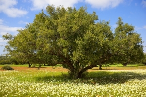 Argan Oil Market Outlook