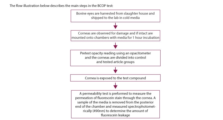 The flow illustration describes the main steps in the BCOP test.