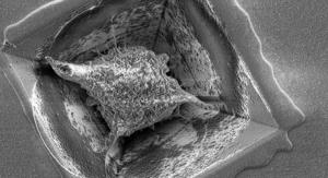 3D Brain-on-a-Chip Mimics Neuronal Network