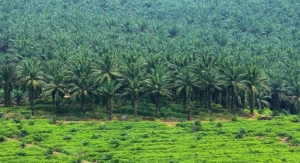 Tropical Deforestation and Palm Oil