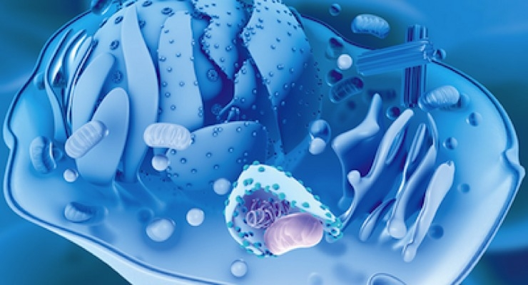 Silab Excels In Autophagy