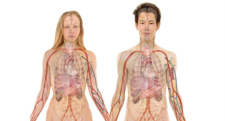 3d Models Bring Patient Anatomy Back To Real World Your Online