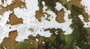 Biocides &  Fungicides Update