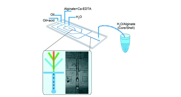 Microfluidic Device Creates 3D Livers in a Droplet